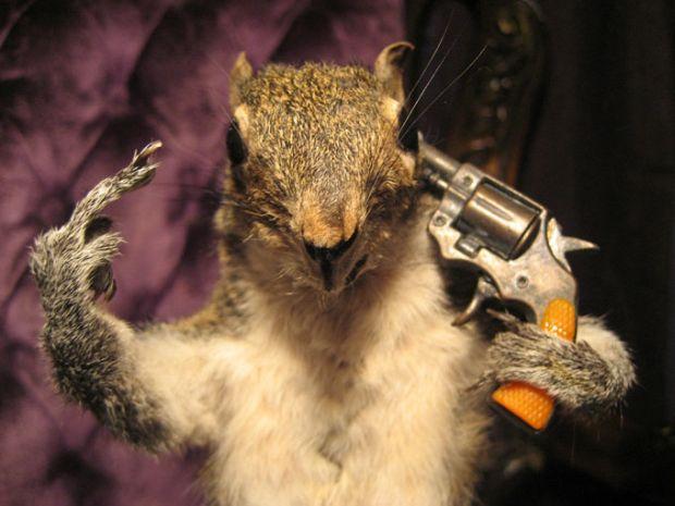 Taxidermy-Suicide-FTW-Squirrel-Shooting-Itself-1