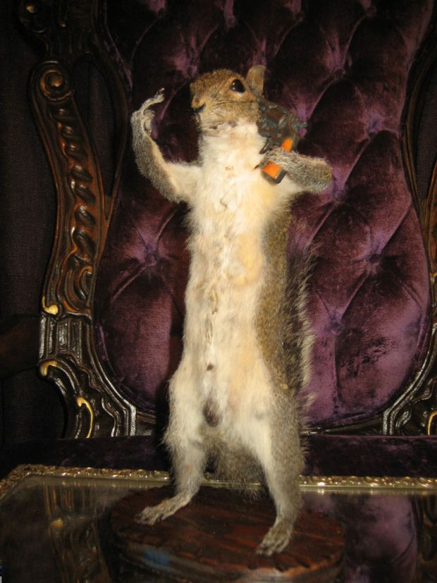 Taxidermy-Suicide-FTW-Squirrel-Shooting-Itself-2