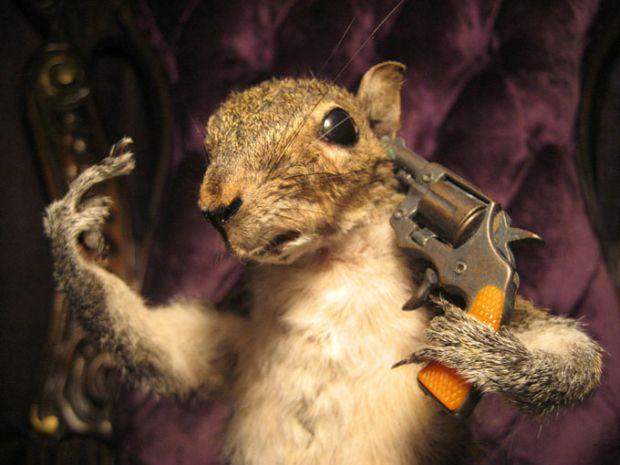 Taxidermy-Suicide-FTW-Squirrel-Shooting-Itself