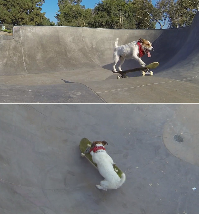 skateboarding-kickflipping-dog