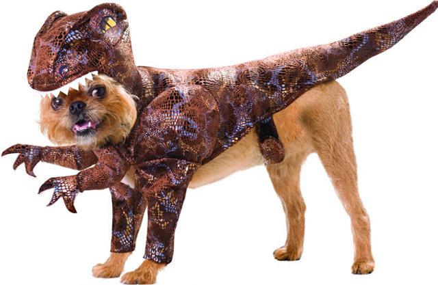 dinosaur-pet